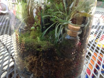 Terrarium Side